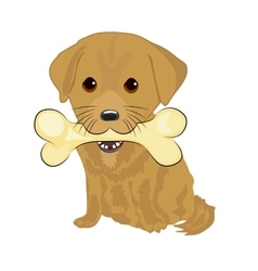 Cute labrador puppy holding big bone with mouth vector