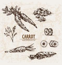 Digital detailed line art carrot vector