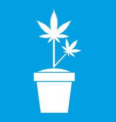 hemp in pot icon white vector image vector image