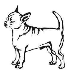 decorative standing portrait of dog short haired vector image vector image