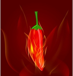 red chili pepper in fire vector image