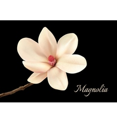 Beautiful white magnolia flower isolated on a vector image