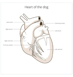 Heart of a dog vector