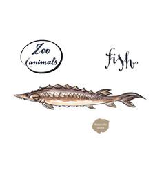 sturgeon fish wild life animal vector image