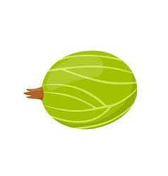 fresh berry sweet gooseberryflat vegetarian food vector image