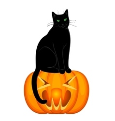 Cat and pumpkin vector