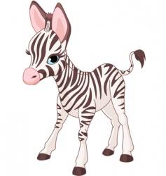 cute zebra foal vector image