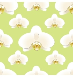 White orchid flowers on a background of pistachio vector