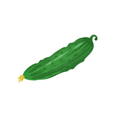 cucumber icon isolated vector image vector image