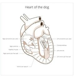 Heart of a dog vector