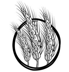 Doodle wheat grain vector