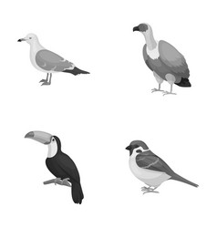 Gull toucan and other species birds set vector