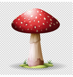 Red mushroom on transparent background vector