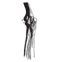 Elbow joint vintage vector