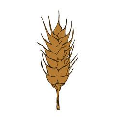 Wheat food symbol vector