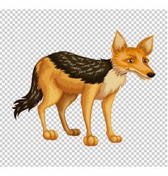 Wild dingo on transparent background vector