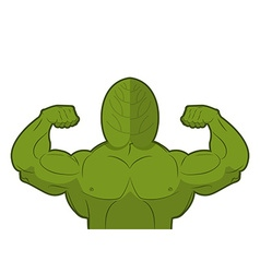 Spinach strong useful herbs with big muscles green vector