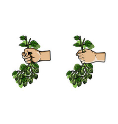 hand grab bunch of hops vector image