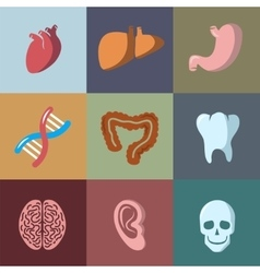 Internal human organs flat icons set vector