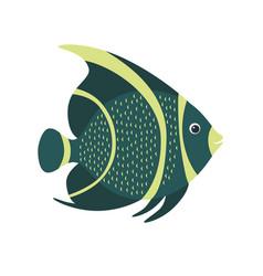 French angelfish pomacanthus paru marine fish vector