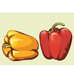 Peppers vegetable isolated vector image vector image