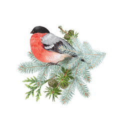 bullfinch winter composition vector image vector image