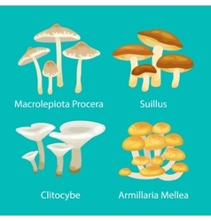 Different type mushrooms for food set isolated vector
