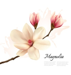 Beautiful magnolia flower background vector image