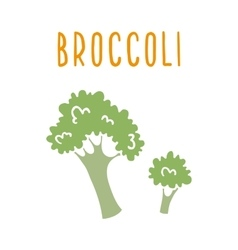 Broccoli isolated on white vector