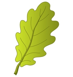 Leaf of oak tree vector