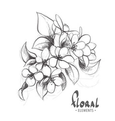 gentle cherry blossoms in black and white vector image