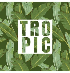 Tropical leaves background exotic graphic vector