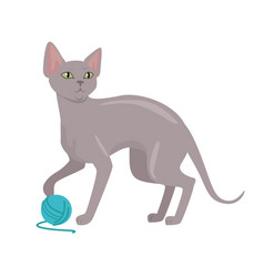Peterbald cat flat design vector