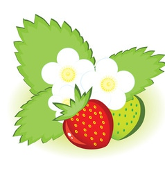 ripe strawberries vector image