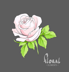 A gentle rose for your beloved vector