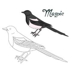 Educational game coloring book magpie bird vector