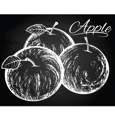 apples on the chalkboard background vector image vector image