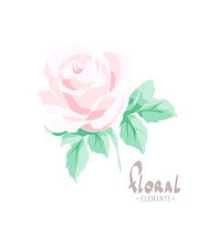 Delicate rose on a white background vector