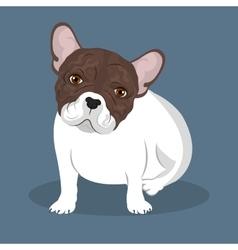 bulldog breed design vector image