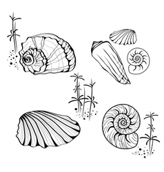 Sea shell and snail collection vector