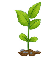 green plant growing from underground vector image