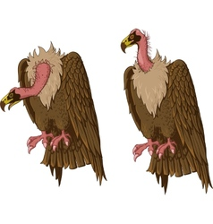 vulture vector image vector image