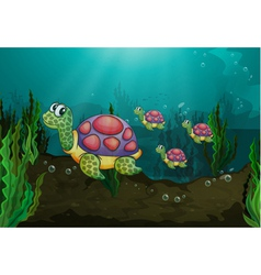 Underwater turtles vector