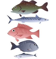 Assorted edible fish vector