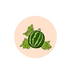 Icon Colorful Watermelon vector image vector image