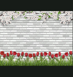 tulips tree branch grass white brick wall vector image