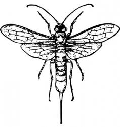 wasp siricidae vector image
