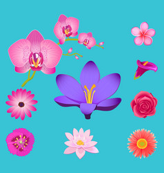 flowers collection isolated on azure background vector image
