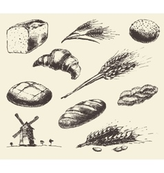 Set fresh draw drawn bread wheat sketch vector