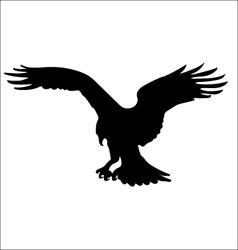 Osprey vector